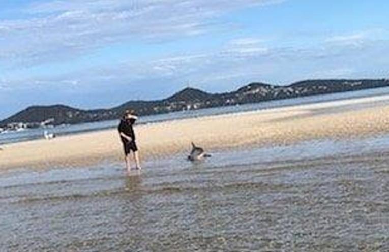 Dolphin Stranding.